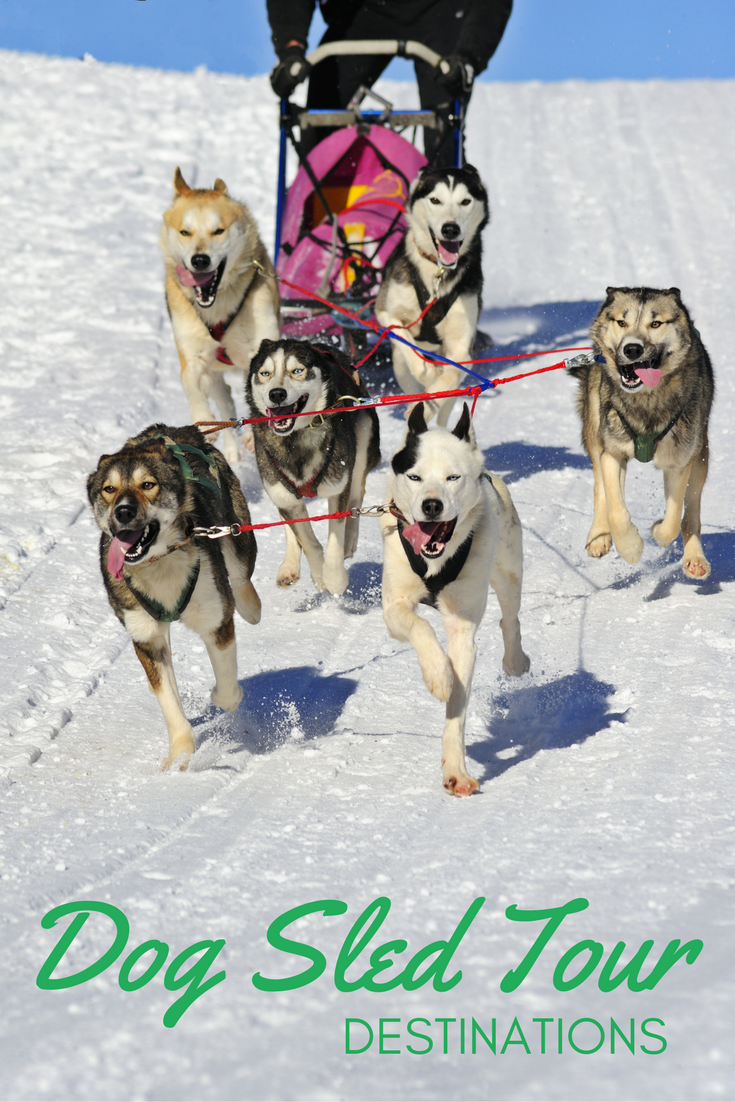 Find out where to take a dog sled tour.