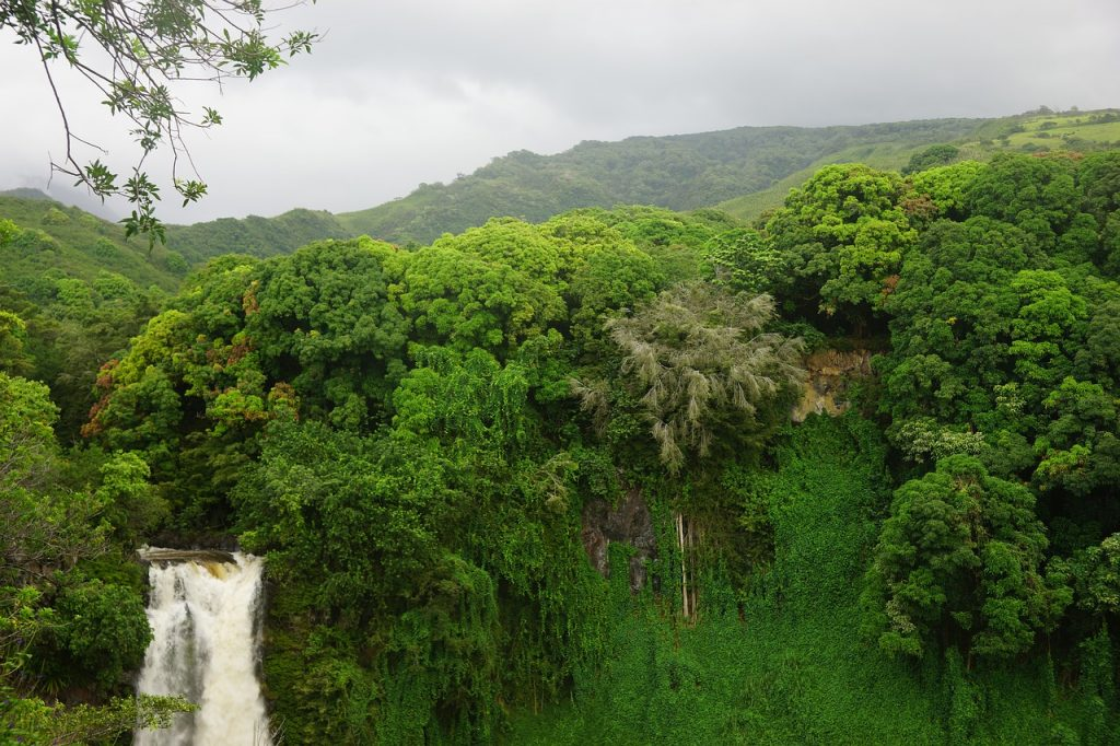 Hawaii landscape with greenery and waterfall in the background