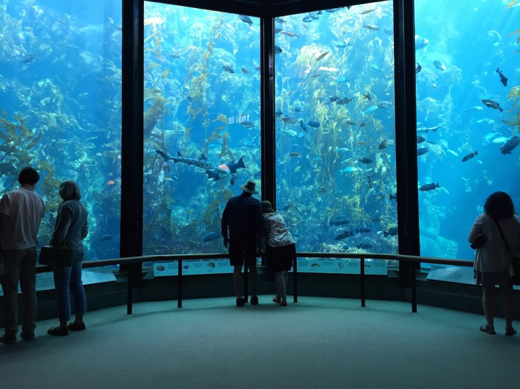 Visitors view fish in the Kelp Forest tank at The Monterey Bay Aquarium in Monterey, California