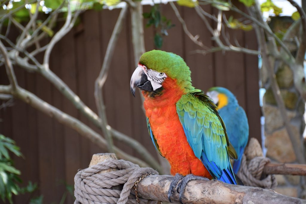 Close up of a green, red and blue macaw sitting on a branch in a Zoo