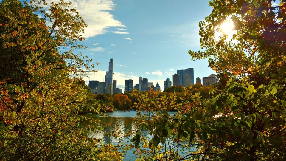 central park during fall