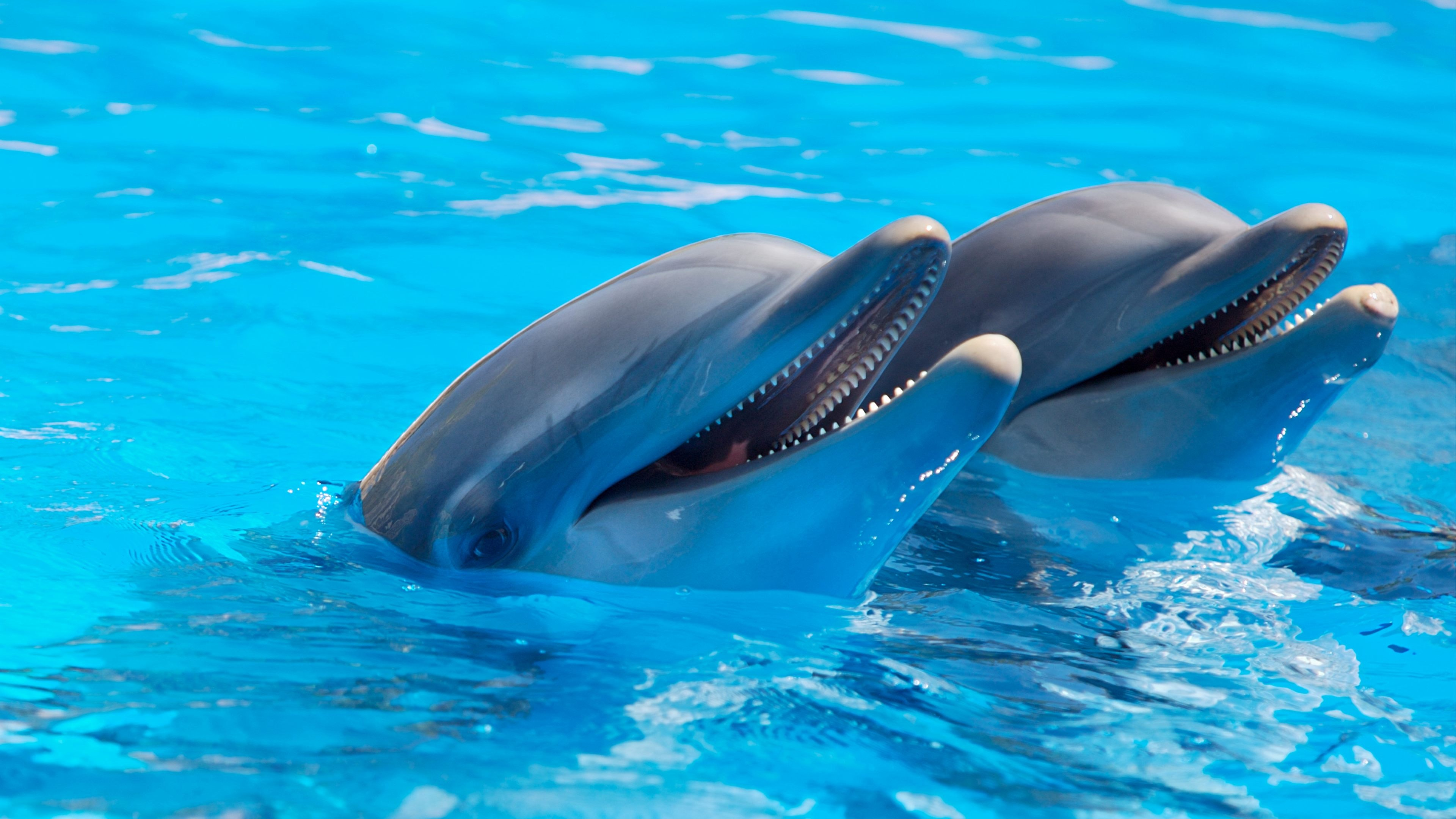 two dolphins side by side, heads out of the crystal clear blue water